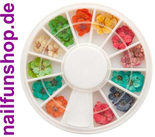 Nailart Trockenblumen - 1 Rondell mit ca. 40 Stück in 12 schönen Farben